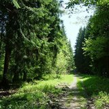 Impressionen aus dem Thüringer Wald