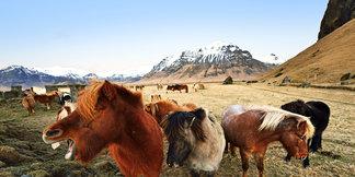 Frostiges Island: Die eisige Schönheit im Winter - ©Norbert-Eisele Hein