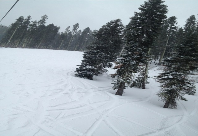 lots of pow! up to knee in some tree runs. A bit windy but No lines anywhere on the mountain