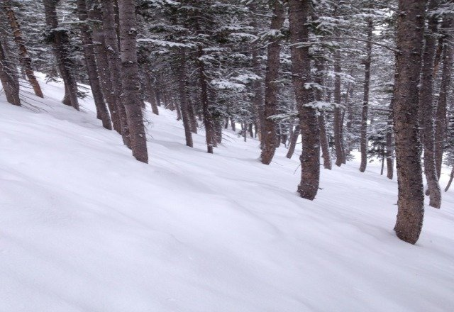 good day yesterday at Deer Valley lots of boot deep powder all day in the trees.