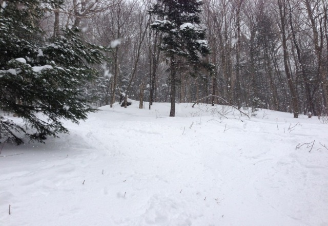 Plenty of snow to bed had today. powder pockets everywhere in the trees