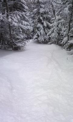 Good snow in the woods just have to watch for rocks. Trails like exhibition and kitzbuhel were good too