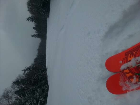 surprise pow day. freshies all day if you know where to look ;) awesome day. trees have good snow
