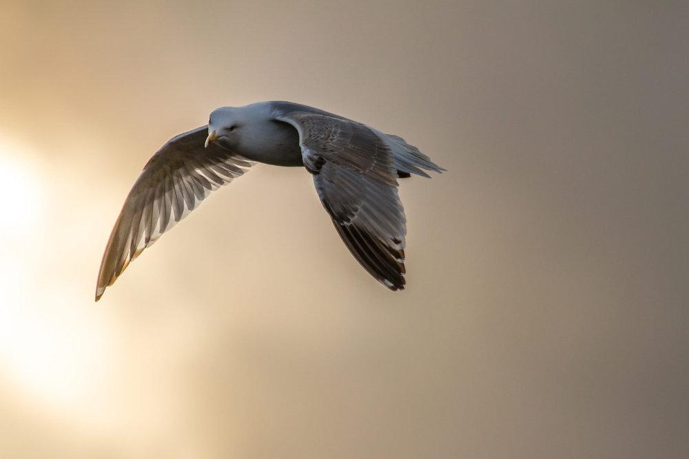 Den Vogel abgeschossen - vielleicht sollten wir Möwen-Fotografen werden. Einfach Brot von der Terrasse werfen und die Kamera auf Dauerfeuer. - ©WhiteHearts