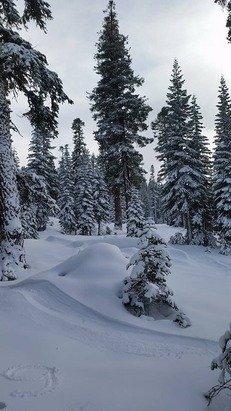 Powder day yesterday. Woods where amazing!!!