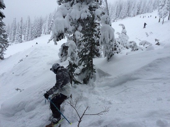 Watch out for those snow sharks.  Fresh pow all around.
