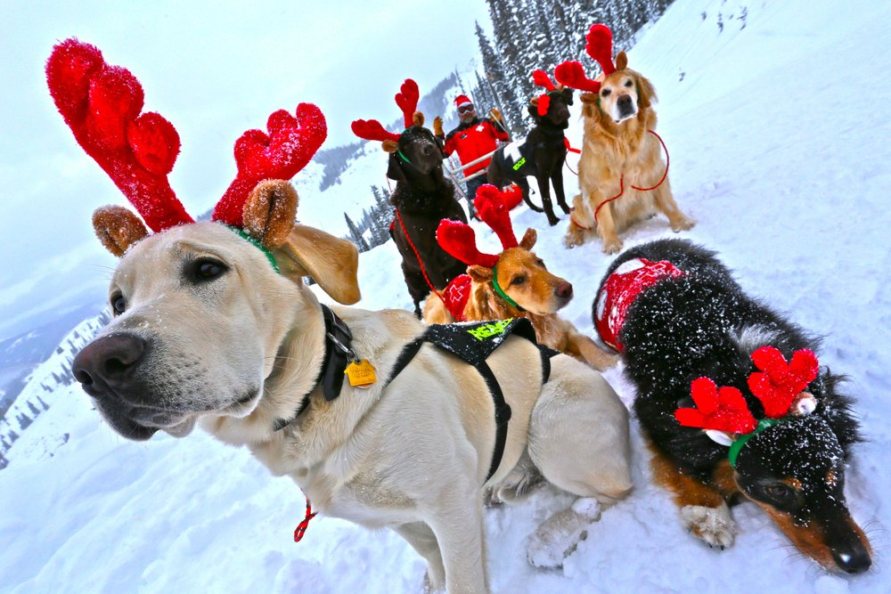 Dogdeer? Moose, Emma, Penny, Betty, Ziggy and Guiness are how Santa prefers to patrol Crested Butte. - ©Crested Butte