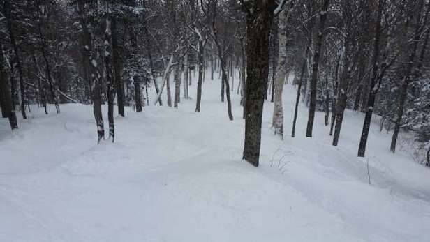 all the glades are incredible. this whole week was amazing. ..2 powder days in 4 days!