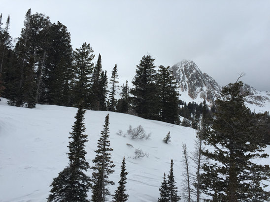 Loved the skiing today, a bit icy on the lower runs. Strawberry was awesome
