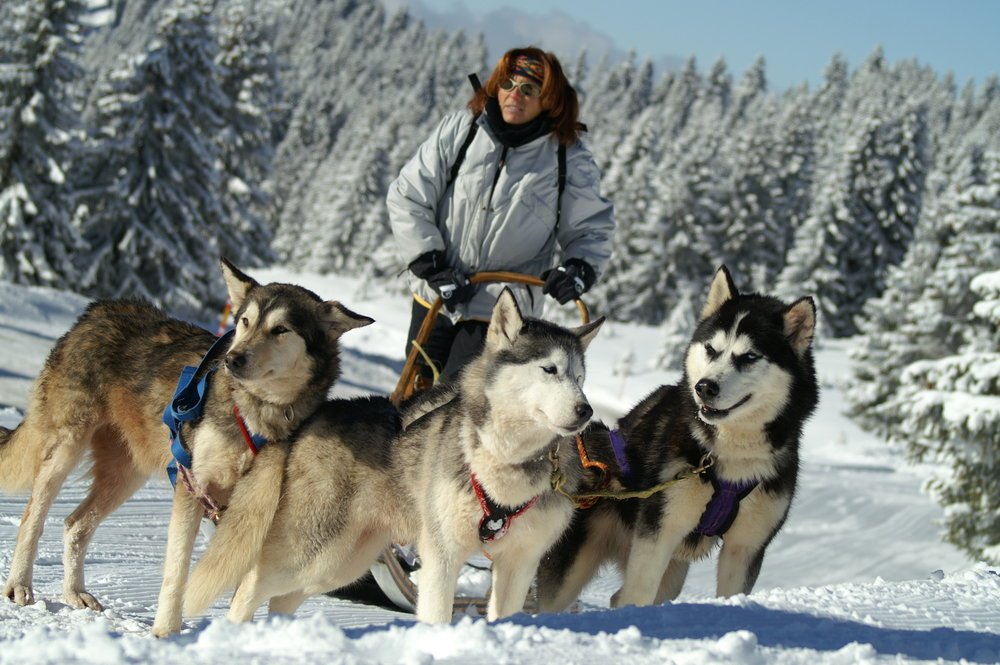 Huskey sleigh, Chantal Bourreau/La Marmotte Bleue