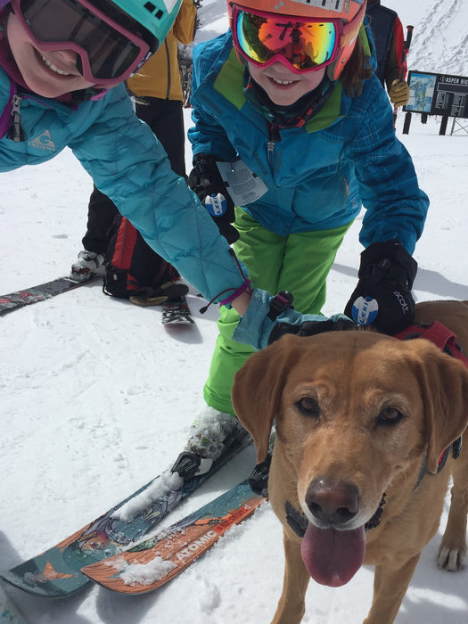 Making friends with an avy dog at Aspen Highlands. - ©Krista Crabtree