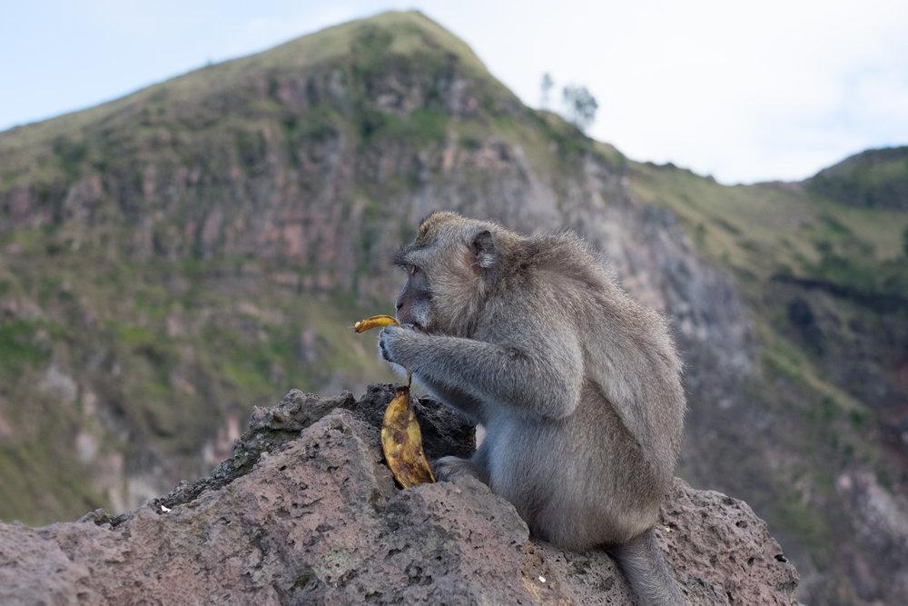 Unterhalb des Gipfels tummeln sich einige Affen, die von den Touristenscharen angezogen werden - ©Sebastian Lindemeyer
