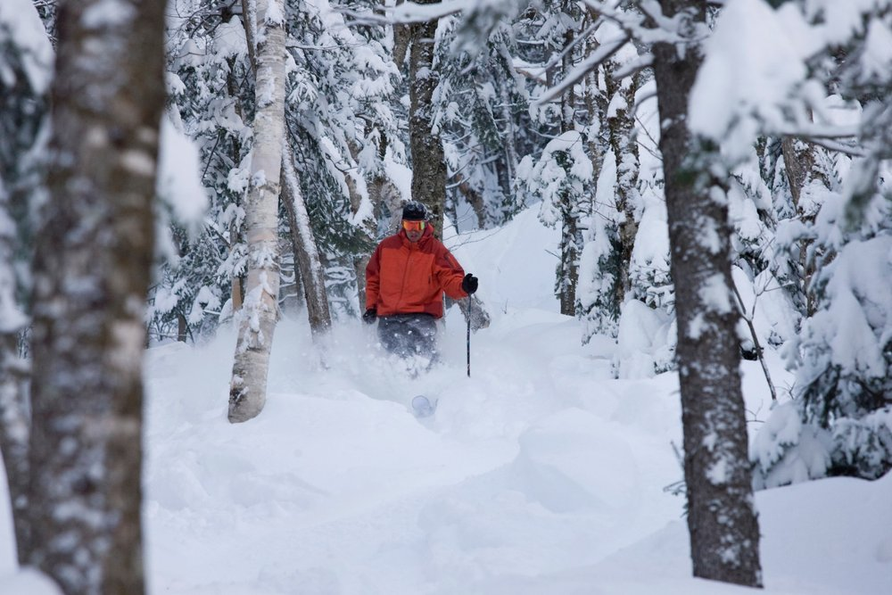 A skier finds some soft turns in the trees. Photo Courtesy of Sunday River.