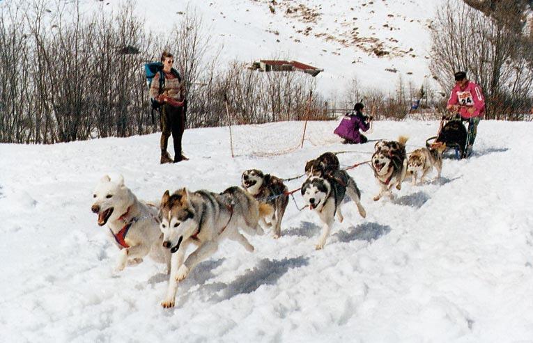 A dogsledding competition at Saas Grund, near Saas Fee.
