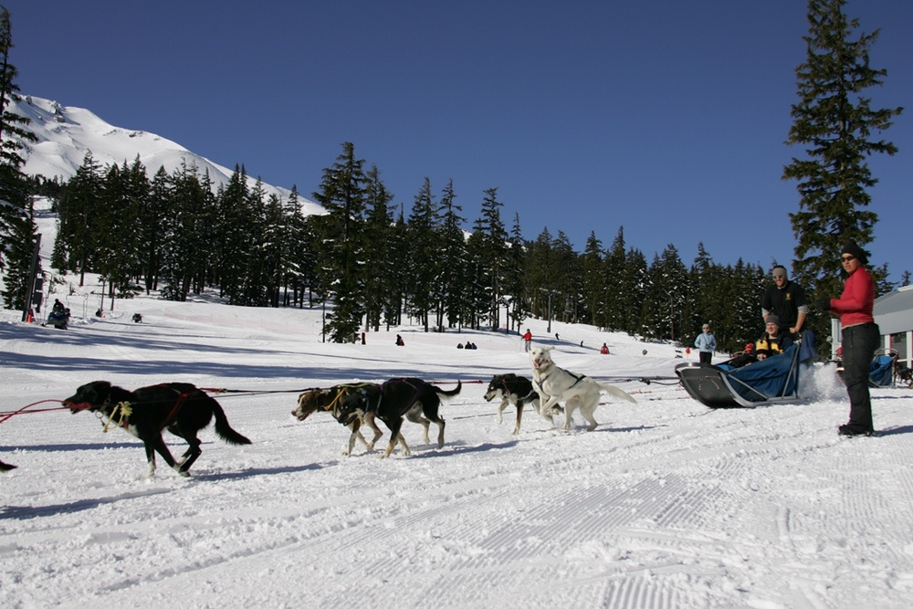 Dogsledding around Mt. Bachelor. Photo courtesy of Mt. Bachelor Resort