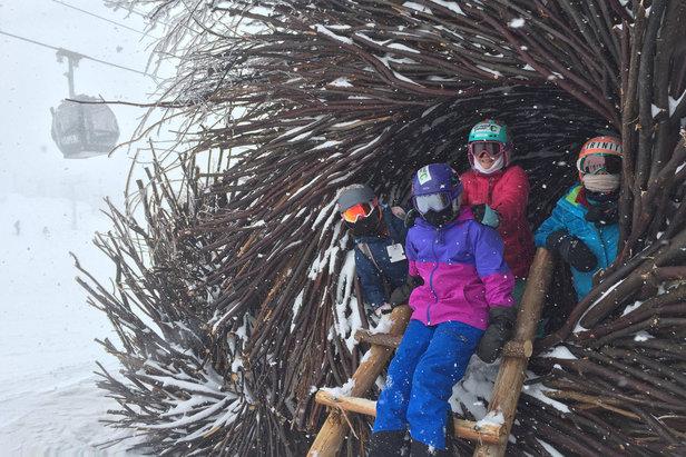 Little birdies take shelter in the Spirit Nests atop Aspen Mountain. - ©Krista Crabtree