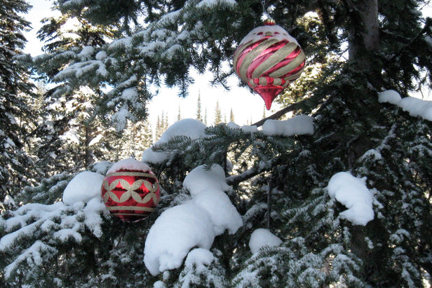 Ornaments decorate trees at Sun Peaks. Photo by Becky Lomax. - ©Becky Lomax