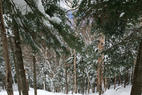 Cannon Mountain - Tons of heavy snow everywhere!  - Cannon Mountain - Tons