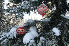 See Sun Peaks Christmas Trees This Winter With Ski And Stay Packages