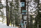 Aspen/Snowmass Tree Shrines: Elvis Presley Shrine
