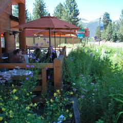 Wildflowers and Mexican cuisine at Roberto's Café.  - ©Lara Kaylor