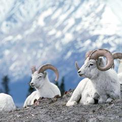 Zum Geburtstag kostenlos: Kanadas schönste Nationalparks  - ©Canadian Tourism