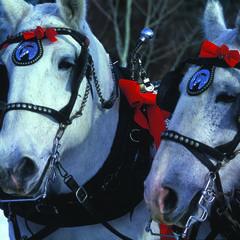 Sun Valley sleigh rides