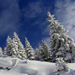Perfektes Skiwetter auf der Ehrwalder Alm - ©Stefan Drexl