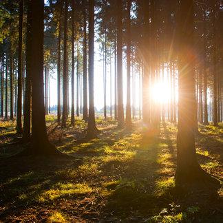 Waldroute im Sauerland - ©Sauerland Tourismus | Oliver Franke