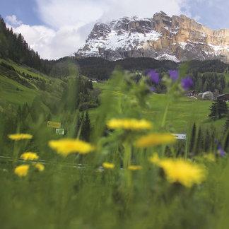 Alta Badia bietet weitläufige Almen und Blumenwiesen für sommerliche Wanderungen vor der Kulisse am berühmten Sellastock - ©Südtirol Marketing | Ralf Kreuels