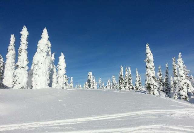 Incredible day! Great snow and tons of sunshine! Best resort in the area by far!