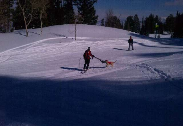 snowbasin is going to the dogs