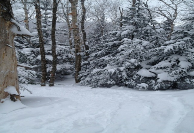 north glade.  im still finding untracked snow at this place after the storm mid last week