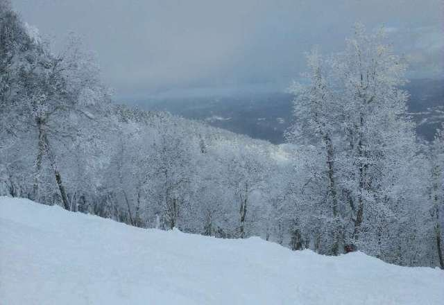 Best Vermont day I've had in two seasons.  Thanks mother nature.  And when the main trails get the powder skiied, there's always plenty of pow in the treeeees!