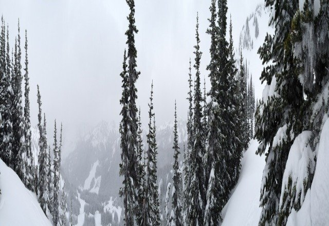 bad visibility. lots of pow. still makes for a good day. should be some sun breaks later in the afternoon.