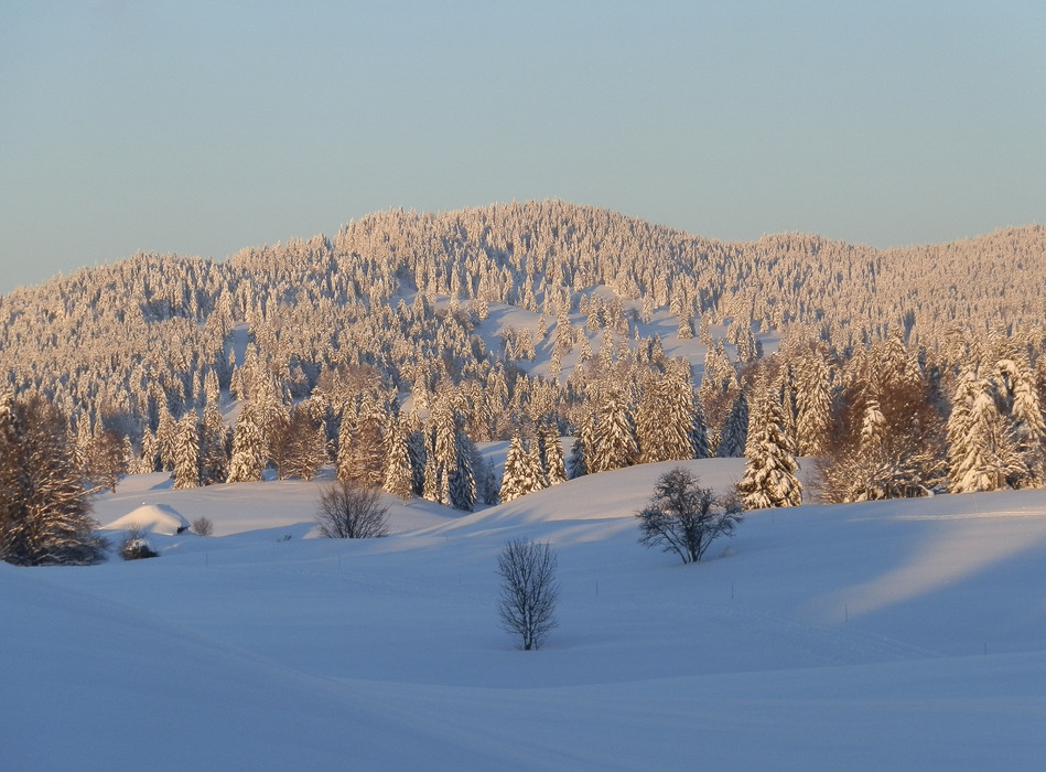 Beauté et quiétude des forêts Jurasiennes (ici à proximité de Monts Jura) - © Alain Girod