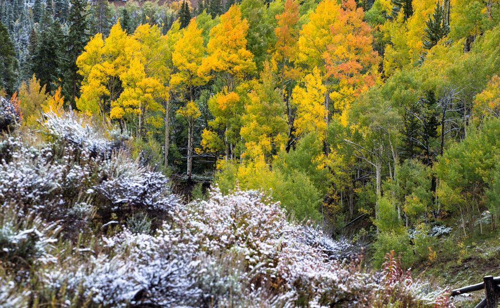 Nice to see white among the fall colors this year - ©Liam Doran