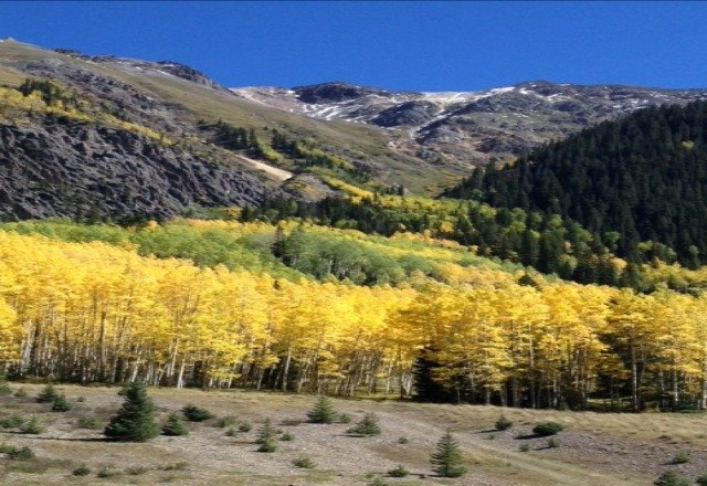 Aspens are changing