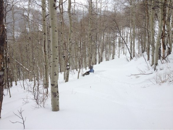 Great day, nice mixture of both packed and fresh powder. Don't let the cry babies detour you from having fun.