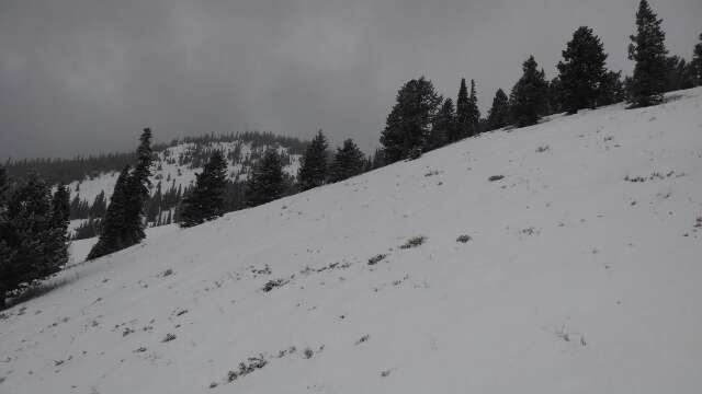 2 inches, Pow Pow,  still coming down