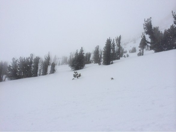 """24"""" of fresh powder. Just don't get stuck in the trees."""