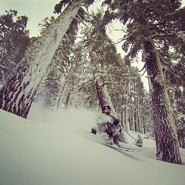 Jordan finding snow pillows in the trees. - © Brian Walker