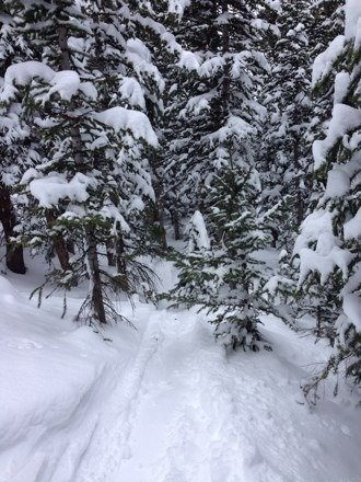 Great day on Snowmass. The Glades had a lot of powder. Does anyone know how Aspen Highlands are?
