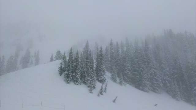 Backside was clumpy and bumpy but overall decent. Frontside high runs heavy spring snow over crust. Middle of frontside was money with some secret pow spots.  Wet spring snow, but lots of it, elevates a usually 3 star spring to a 4 star adventure. All snow soft for low and high speed bails.