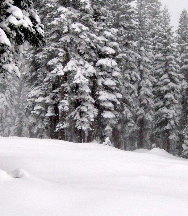 Snow covered slopes at Dodge Ridge, CA, taken 12/15/2008.