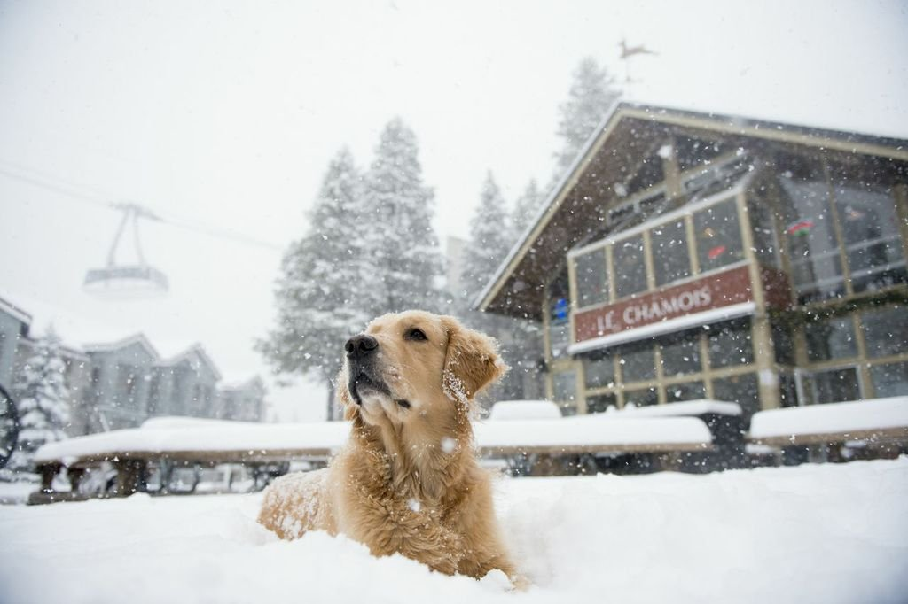 Decade after decade since it first opened its doors in 1969, Le Chamois and Loft Bar remains the go-to spot for reliving the glory of every ski day in Squaw Valley.  - ©Le Chamois and Loft Bar
