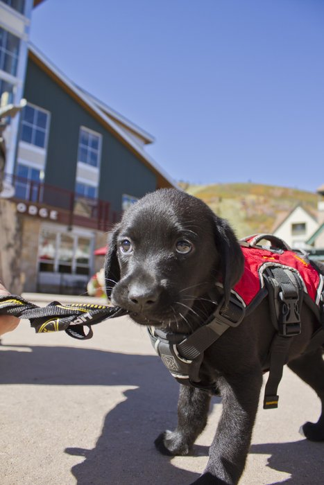 "Annie ""Pancakes"" Oakley in avalanche training at Park City Mountain Resort. - © Park City Mountain Resort"