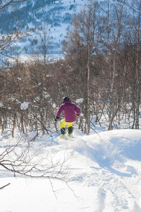 Vi fant noen urørte linjer i skogen! - © Eirik Aspaas