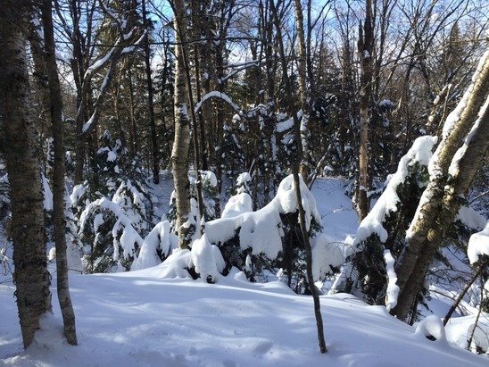 Powder stashes are still in the woods. At Bolton, always take the trails less traveled.