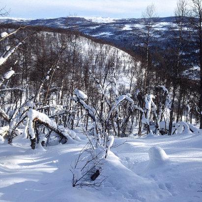 Nydelig i Skarslia i dag! Mye pudder i skogen!
